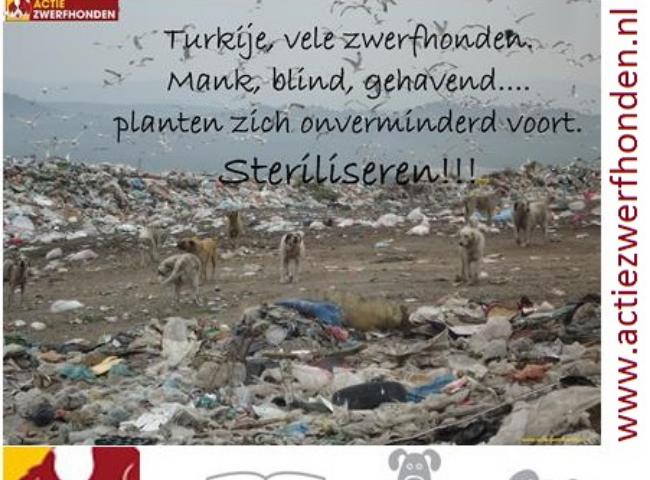 StraydogsCampaign Foundation – Stichting ActieZwerfhonden.